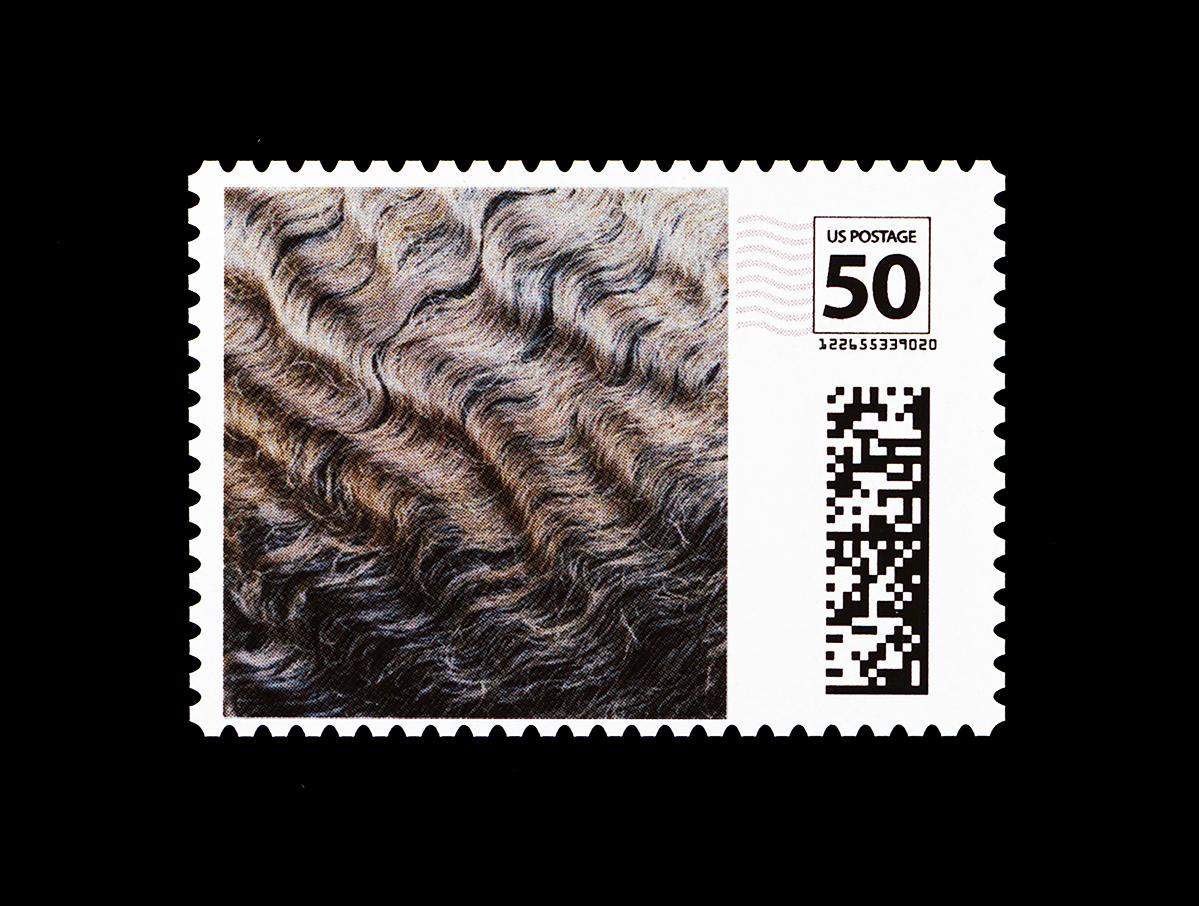 john lucas and claudia rankine stamped pioneer works